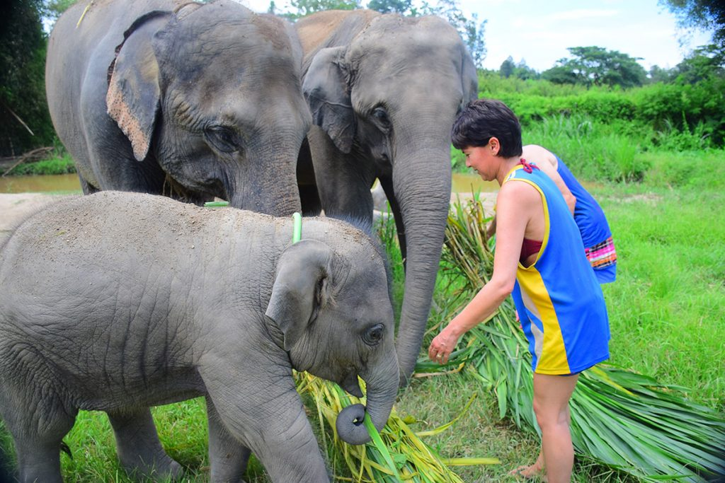 Volunteer Elephant Care Program