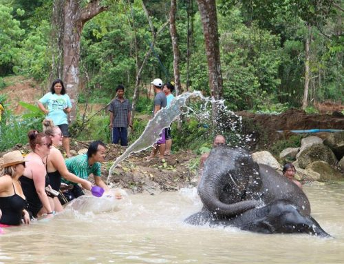 Elephant Retirement Park Phuket – OPEN NOW!