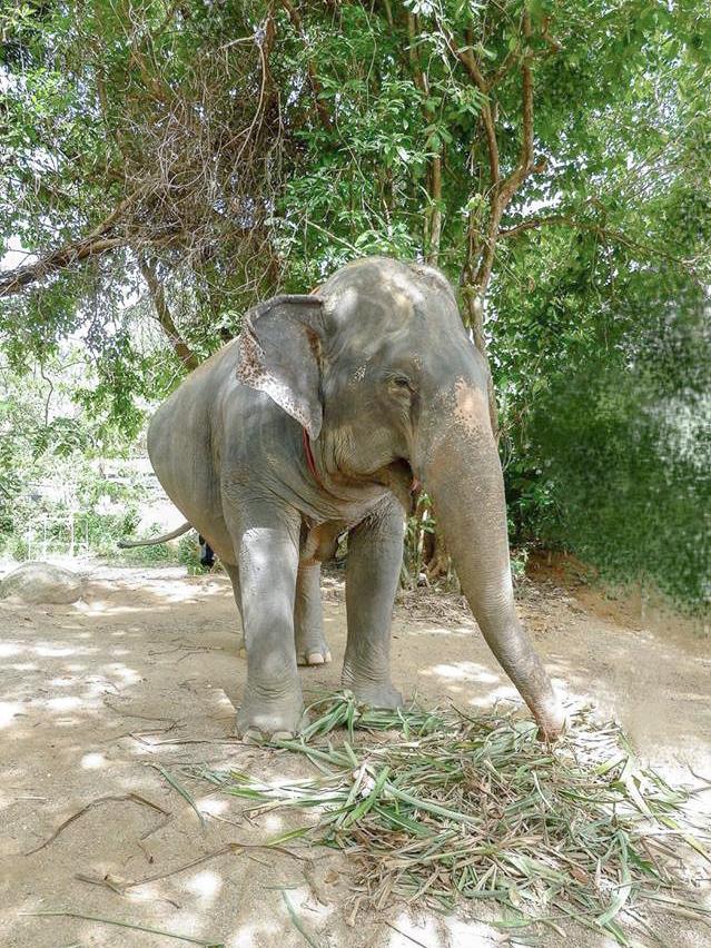 Emma Elephant Retirement Park Phuket